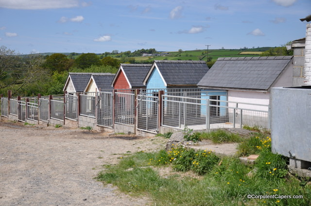 Colourful Pig Pens