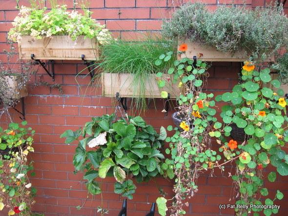 Corpulent Capers: Zest Herb Garden
